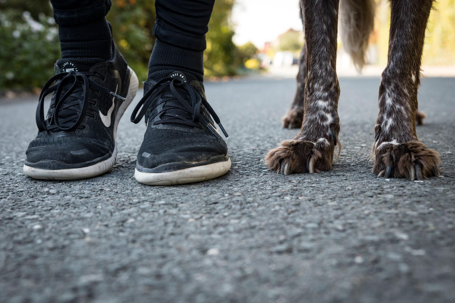 Joggen mit Hund nach getaner Arbeit